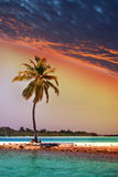 Lonely palm tree in the sea at sunset.Sea tropical landscape Stock Image