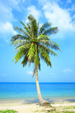 Lonely palm tree on sky background. Royalty Free Stock Images