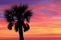 Lonely palm tree on sunset sky Stock Image
