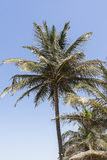 Lonely palm Royalty Free Stock Images