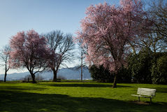 Lonely Park Bench. Morning park bench in portland oregon Stock Photos