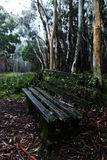 A lonely park bench in sodden eucalyptus rainforest. A lonely, moss covered park bench in sodden ,misty eucalyptus rainforest Royalty Free Stock Images