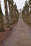 Lonely path. Winter lime trees converging on a graveyard chapel Stock Photography