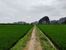 Lonely path between green rice fields in front of the UNESCO world heritage Tam Coc in Vietnam royalty free stock photo