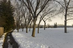 Lonely Path Moody Weather Winter Blues Public Park Calgary Alberta. Lonely Path in snowy park and barren aspen tree branches in late Fall near Market Mall in stock image
