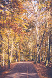 Lonely path in park. Stock Images