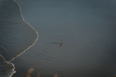 Lonely penguin at the beach Royalty Free Stock Photography