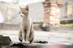 Lonely pet stock image