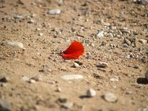Lonely petal. Lonely red petal in middle of gravel road Stock Images