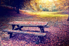 Lonely picnic place in autumn forest Royalty Free Stock Photo
