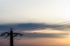 Lonely pigeon on electricity cable Royalty Free Stock Photo