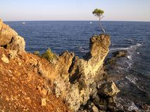 Lonely pine - Çamyuva, Kemer, coast and beaches of Turkey Royalty Free Stock Photography