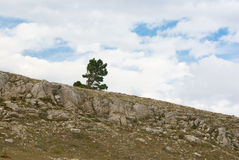 Lonely pine Royalty Free Stock Photography