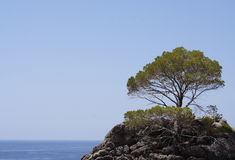Lonely pine. A lonely pine on a small island in the Mediterranean sea Stock Images