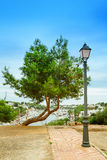 Lonely pine Royalty Free Stock Image