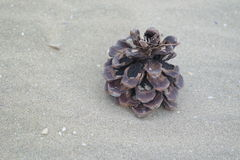 Lonely pine cone Stock Image