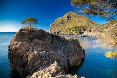 Lonely pine growing on a rocky hill near Sa Calobra Royalty Free Stock Photo