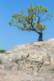 Lonely pine grows on rock. Sithonia Peninsula. Royalty Free Stock Photo