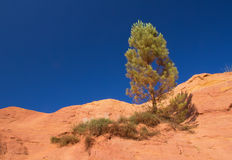 Lonely pine on the ocher hill Royalty Free Stock Image
