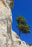 Lonely pine on the rock. Stock Image
