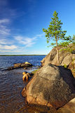 Lonely pine on the rock. Shore of the White sea, Karelia, Russia Stock Photos