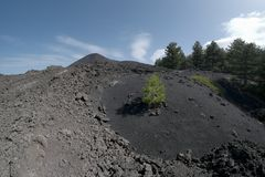 Lonely pine sapling colonize volcanic ash of cinder cone in Etna Park. Sicily stock image