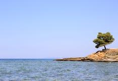 Lonely pine stone ledge. Stock Image