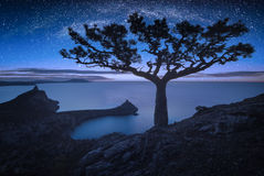 Lonely pine tree against mikly way royalty free stock image