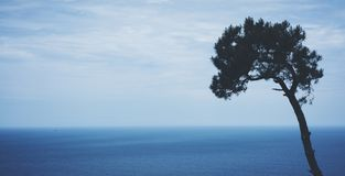 Lonely pine tree on background sea scape, waves of blue quiet ocean coast landscape. Panorama horizon perspective view nature hili. Day. Travel summer mockup stock photos