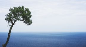 Lonely pine tree on background sea scape, waves of blue quiet ocean coast landscape. Panorama horizon perspective view nature hili. Day. Travel summer mockup stock images