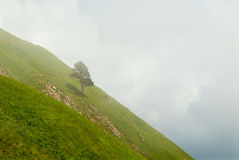 Lonely pine tree on the hill in the clouds Stock Photo