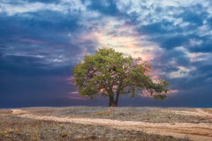 Lonely pine tree landscape at sunset beautiful sky road Stock Photo