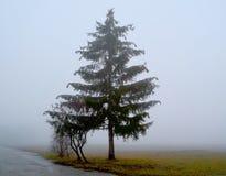 Lonely pine tree stock image