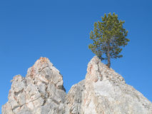 Lonely pine tree. On a mountain top Stock Photography