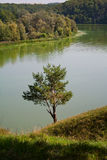 Lonely pine tree on the river bank Stock Photography