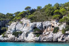 PIne tree on the cliff. Lonely pIne tree on the rock royalty free stock images