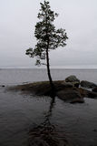 Lonely Pine-Tree on a Rock Stock Photo