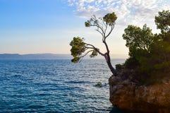 Pine tree on a rock stock photo