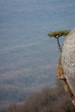 Lonely pine tree on rocks top Royalty Free Stock Image