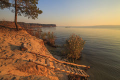 Lonely pine tree on the shore of a  lake Stock Images