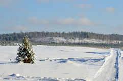 Lonely pine tree in a snowy field. February. Royalty Free Stock Photos
