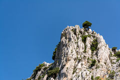 Lonely pine tree on top of cliff Royalty Free Stock Images
