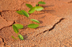 Lonely plant. Penetrating dry clay stock photography