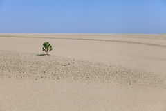 Lonely plant in the desert Royalty Free Stock Photo