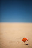 Lonely Plant on Desert stock image