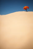 Lonely Plant on Desert Royalty Free Stock Images
