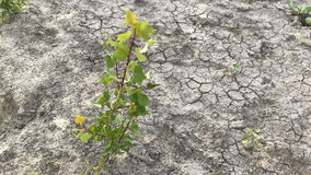 Lonely plant on dry land stock video