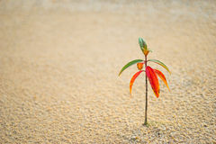 Lonely Plant Flourishing after Rain Stock Image