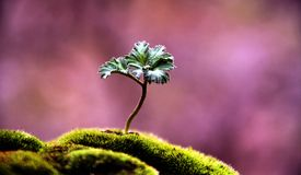 A lonely plant Stock Images