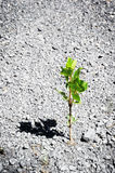 Lonely plant growing on ground Royalty Free Stock Photography